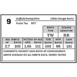Lot 9 - Suffolk/Hamp