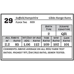Lot 29 - Suffolk/Hamp