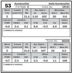 Lot 53 - Rambouillet