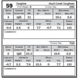 Lot 59 - Targhee
