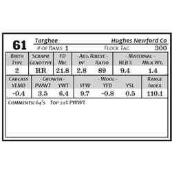 Lot 61 - Targhee