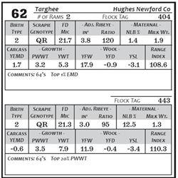 Lot 62 - Targhee