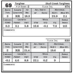 Lot 69 - Targhee