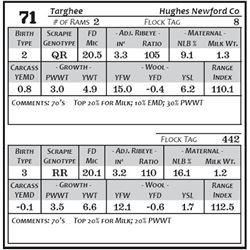 Lot 71 - Targhee