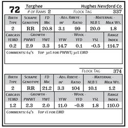 Lot 72 - Targhee