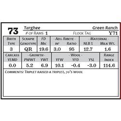 Lot 73 - Targhee
