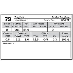Lot 79 - Targhee