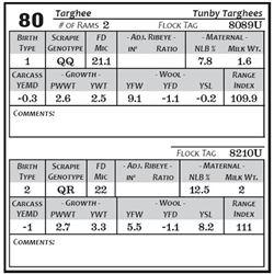 Lot 80 - Targhee