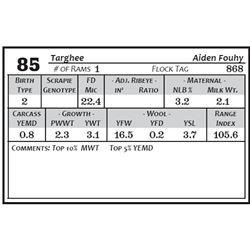 Lot 85 - Targhee
