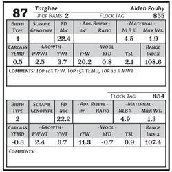 Lot 87 - Targhee