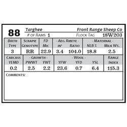 Lot 88 - Targhee