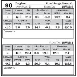 Lot 90 - Targhee