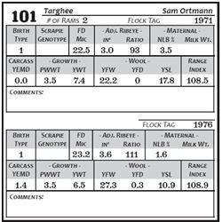 Lot 101 - Targhee