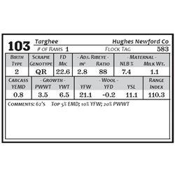 Lot 103 - Targhee
