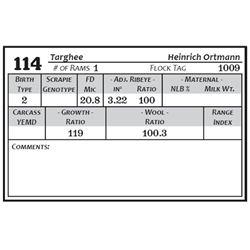 Lot 114 - Targhee