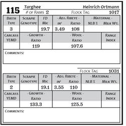 Lot 115 - Targhee