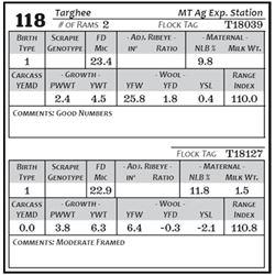Lot 118 - Targhee