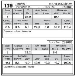 Lot 119 - Targhee
