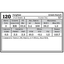 Lot 120 - Targhee