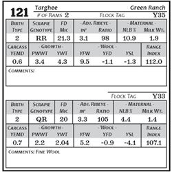 Lot 121 - Targhee