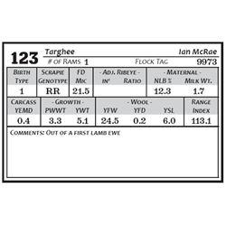 Lot 123 - Targhee