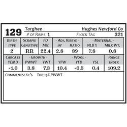 Lot 129 - Targhee
