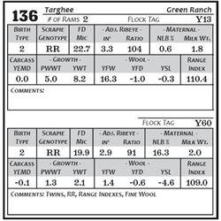 Lot 136 - Targhee