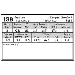 Lot 138 - Targhee