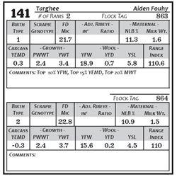 Lot 141 - Targhee