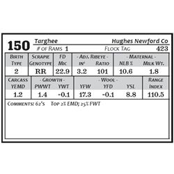 Lot 150 - Targhee