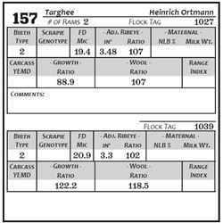 Lot 157 - Targhee