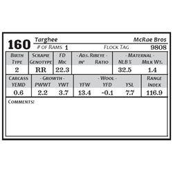 Lot 160 - Targhee