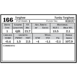 Lot 166 - Targhee