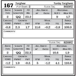 Lot 167 - Targhee