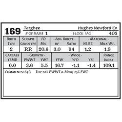 Lot 169 - Targhee