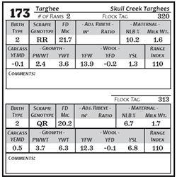 Lot 173 - Targhee