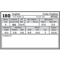 Lot 180 - Targhee