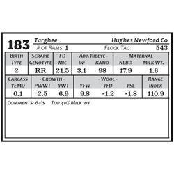 Lot 183 - Targhee