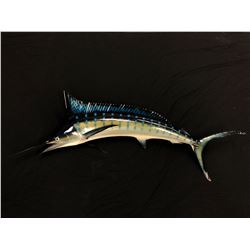 """HAND PAINTED LIFE SIZE MARLIN SCULPTURE, 9' 3"""" TIP TO TAIL"""
