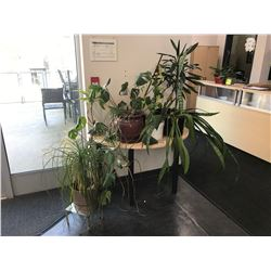MAPLE CRESCENT TABLE WITH ASSORTED PLANTS