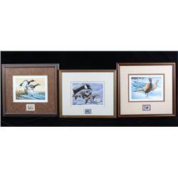 North American Game Bird Framed Prints & Stamp Set