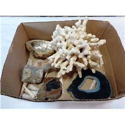 BOX OF CORAL AND SEASHELLS
