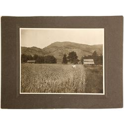 Large California Agricultural Photos (2)  90304