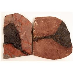 Crinoid Fossil Slabs, Prepared Pair  108638