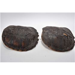 """Two snapping turtle shells including an 11"""" and a 11 1/2"""""""