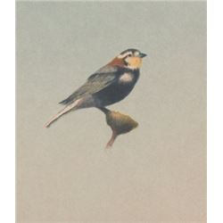 Russel Chatham, Chesnut Collared Longspur