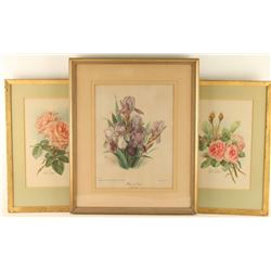 Lot of 3 Floral Lithographs by Paul de Longpre