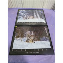 LOT OF 2 TIMBER WOLF PICTURES