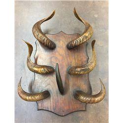 Late 1800s Horn Rack