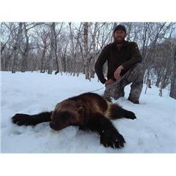 10-day Russia Wolverine Hunt for One Hunter and One Observer